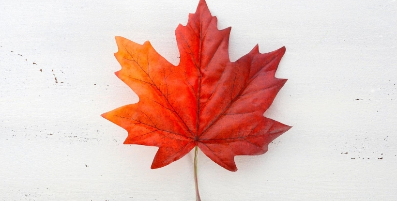 Jobs Across The World: Maple Leaf